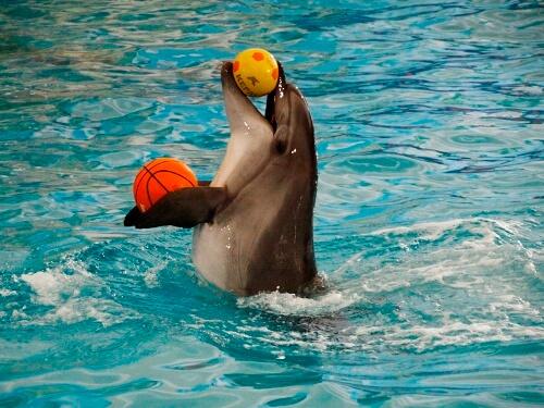 Дельфинарий в Соль-Илецке
